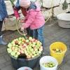 obst-aepfel-zwetschgen-009